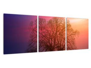 Obraz stromů v mlze (V020088V9030)
