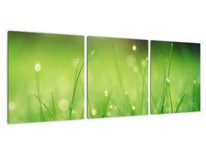 Obraz - rosa na trávě (V020169V9030)