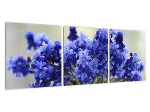 Obraz kytice modrých květů (V020175V9030)