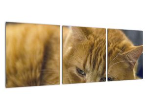 Obraz mačky (V020192V9030)