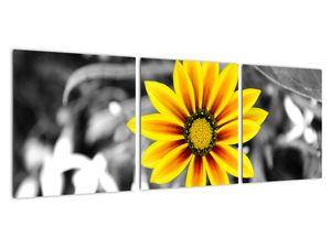 Obraz žluté květiny (V020361V9030)