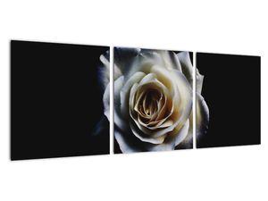 Obraz bílé růže (V020370V9030)