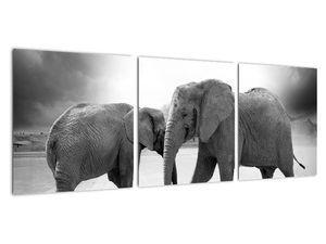 Obraz - černobílí sloni (V020398V9030)