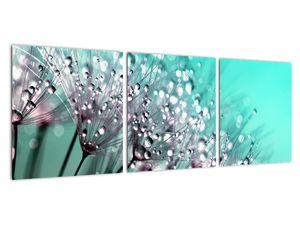 Obraz - orosená rostlina (V020507V9030)