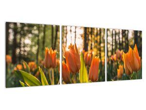 Obraz - oranžové tulipány (V020552V9030)