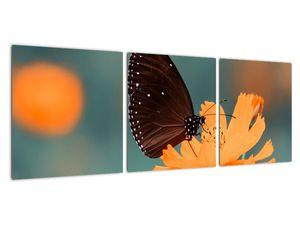 Obraz - motýl na oranžové květině (V020577V9030)