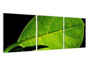 Obraz - zelený list (V020628V9030)