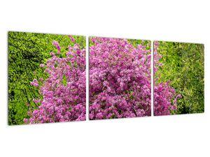 Obraz rozkvetlého stromu na louce (V020654V9030)