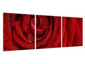 Obraz - detail růže (V020684V9030)