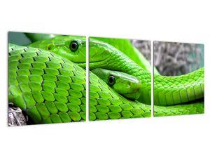 Obraz zelených hadů (V020689V9030)