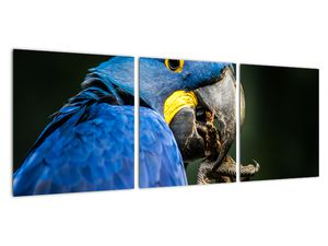 Obraz papouška (V020714V9030)
