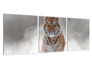 Obraz bežiaceho tigra v snehu (V020719V9030)