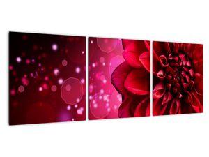 Obraz červené kvety (V020807V9030)
