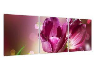 Obraz růžových tulipánů (V020887V9030)