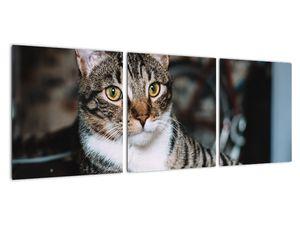 Obraz kočky (V020889V9030)