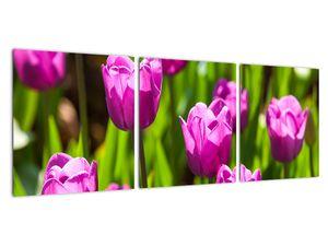 Obraz tulipánov na lúke (V020893V9030)