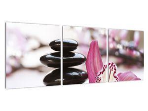 Obraz masážních kamenů a orchidee (V020910V9030)