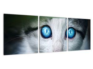 Obraz kočky (V020944V9030)