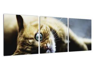Obraz kočky (V020963V9030)