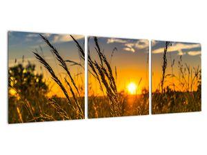Obraz pole při západu slunce (V021001V9030)