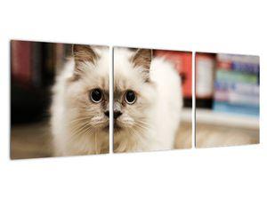 Obraz bílé kočky (V021124V9030)