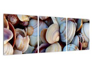 Kagyló képe (V021131V9030)