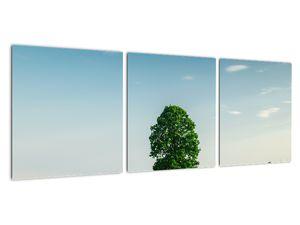 Obraz stromu na louce (V021171V9030)