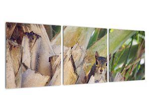 Obraz veverky na stromu (V021177V9030)