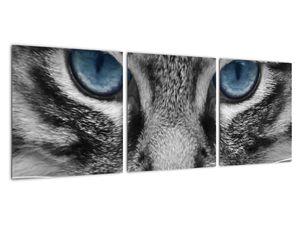 Obraz kočky (V021221V9030)