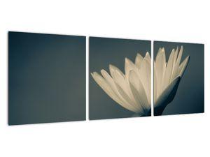 Obraz květiny (V021223V9030)