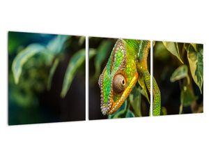Obraz chameleona (V021236V9030)