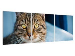 Obraz - Kočka domácí (V021323V9030)