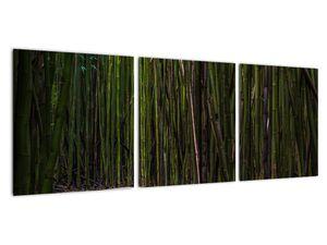 Obraz - Medzi bambusy (V021324V9030)