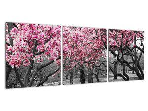 Obraz stromů Magnolíie (V021344V9030)