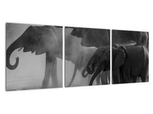 Obraz slonů - černobílý (V021575V9030)
