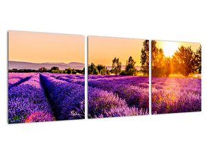 Obraz levandulového pole, Provence (V021590V9030)