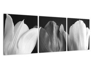Kép - fekete-fehér tulipán virág (V021916V9030)