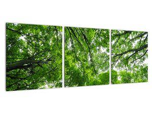 Obraz - Pohled do korun stromů (V021918V9030)