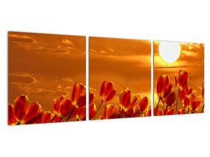 Obraz rozkvetlého lánu s tulipány (V021920V9030)