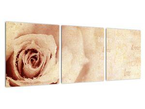 Obraz - Květ růže pro zamilované (V021945V9030)