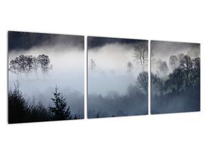 Obraz mlhy nad lesem (V021947V9030)