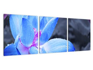 Obraz květu v detailu (V021974V9030)