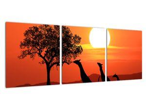 Obraz žiraf při západu slunce (V022006V9030)