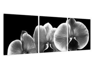 Obraz květu orchideje (V022015V9030)