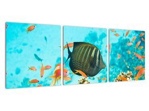 Obraz podmořského světa (V022109V9030)