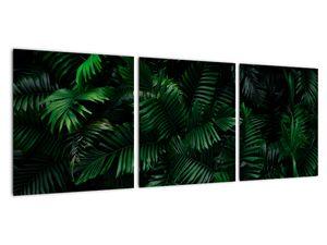 Obraz - Tropické kapradí (V022138V9030)