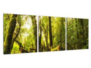 Obraz mechové džungle (V022161V9030)