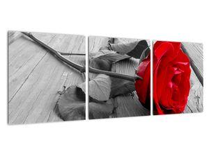 Slika crvene ruže (V022288V9030)