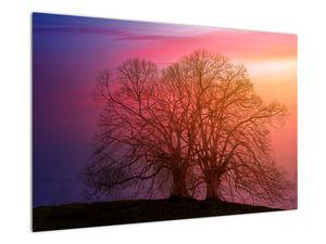 Obraz stromů v mlze (V020088V9060)