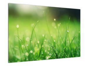 Obraz - rosa na trávě (V020169V9060)